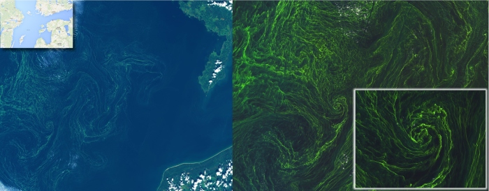 7 August 2015. Algal bloom in the Baltic sea captured by Sentinel-2A. Credit: ESA