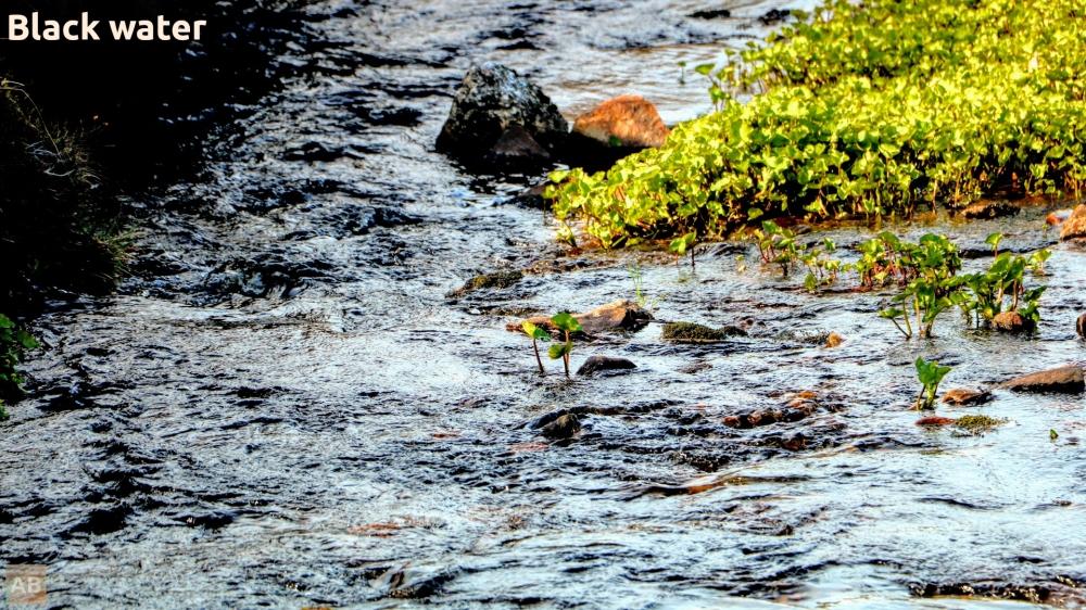 nature1_ riverstream