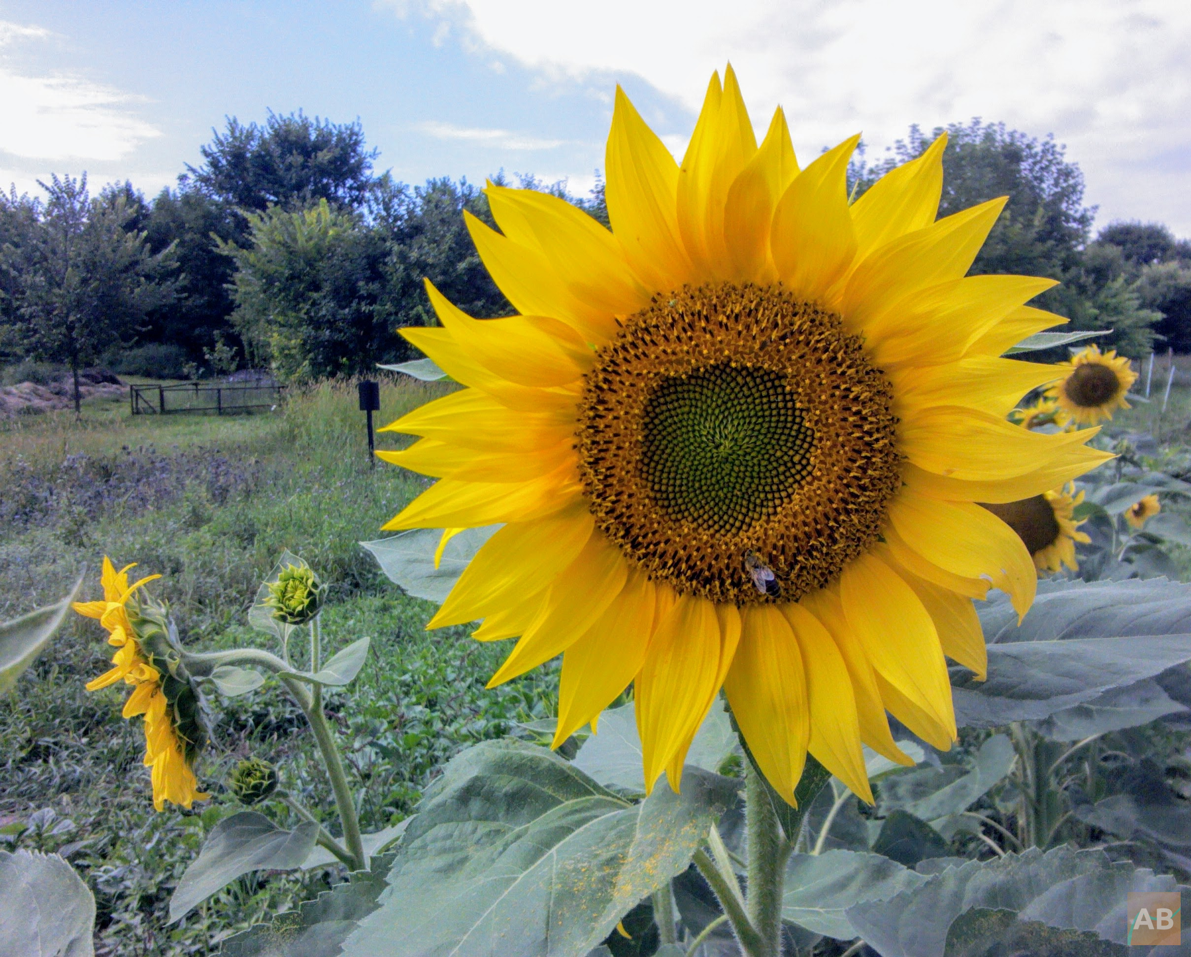 fibonacci flower space for science